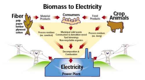biomass_graphic