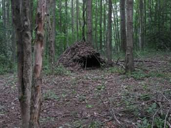debris-hut