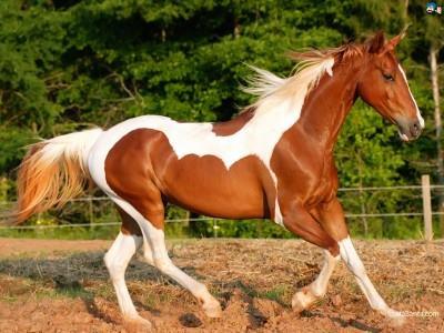 horse-stylonica-400x300