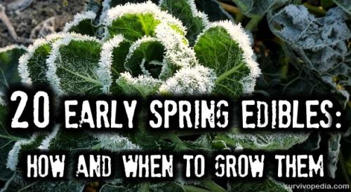 BIG-Edibles1 Early Spring Edibles