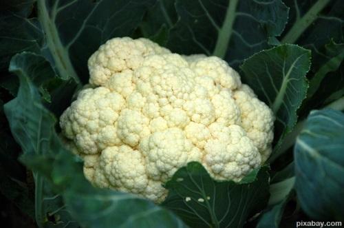 cauliflower-651402_1920