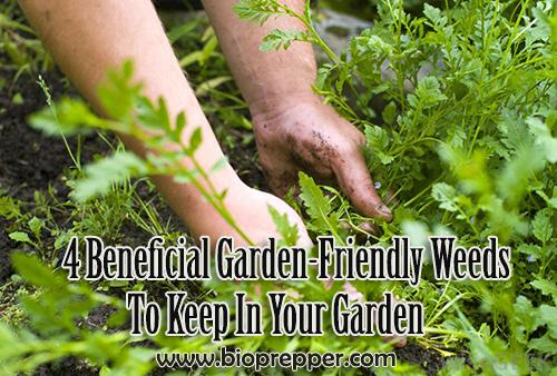 4 Beneficial Garden-Friendly Weeds To Keep In Your Garden
