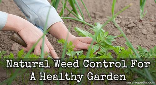 Natural Weed Control