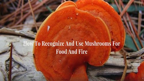 Can Mushrooms Hurt Dogs